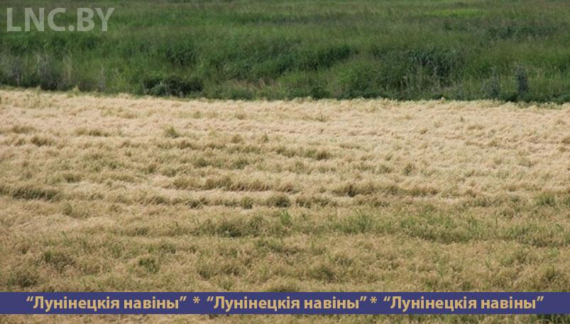Photo of Сначала засуха, а потом заморозки внесли свои коррективы в вес будущего урожая