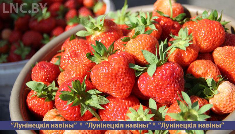 Photo of Клубничный сезон открыт, но на Дворецком рынке пока тихо