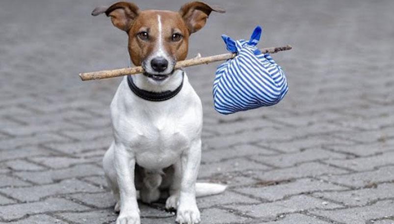 Photo of А вы заплатили налог за владение собаками?