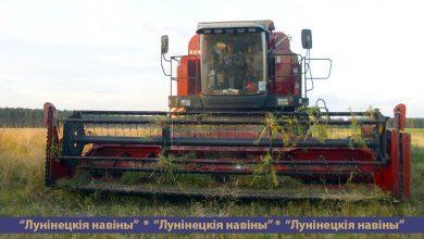 Photo of Сельскохозяйственные организации района приступили к уборке зерновых