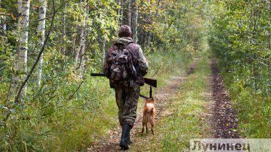 Photo of Сезон охоты на зайца открыт
