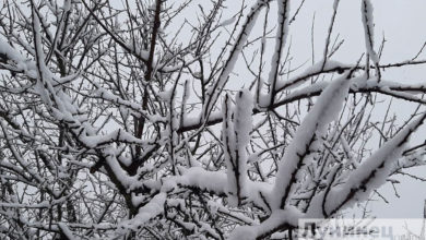 Photo of В Лунинецком районе из-за сильного снегопада без света остались 12 населенных пунктов