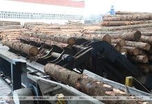 Photo of В Беларуси будет внедрена единая автоматизированная госсистема учета древесины и сделок с ней