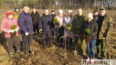 """Photo of 80 тысяч деревьев высадили в Лунинецком районе во время """"Недели леса"""""""