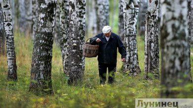 Photo of С 19 июля снят запрет на посещение лесов в Лунинецком районе