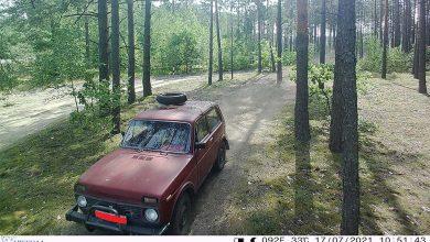 Photo of Фотоловушки в лесах района сработали трижды