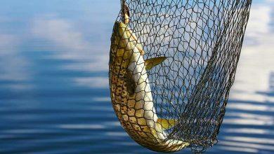 Photo of Рыбаки на Припяти словили рыбы на 6177 рублей. И сами попались