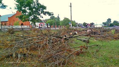 Photo of Фотофакт. В Микашевичах, в сквере на площади Коржа, провели санитарную рубку деревьев