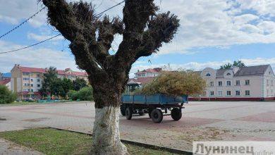 Photo of Гусеницы в Лунинце. Коммунальники приступили к обработке