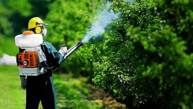 Photo of Работники ЖКХ с 20 сентября приступят к химической обработке деревьев в Лунинце
