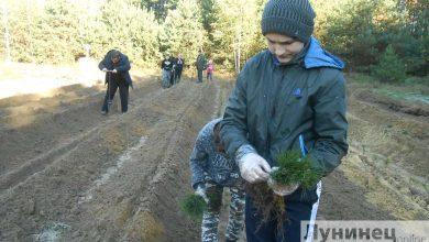 Photo of Вучні з Бродніцы пасадзілі каля 40 сотак лесу